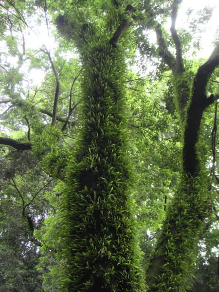 2011,6,18東高根森林公園