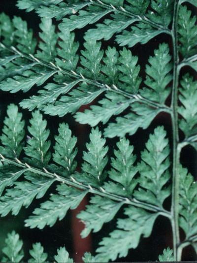 1991,10,11新百合ヶ丘万福寺の森